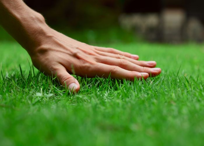 expert grass planting and seeding in Rhode Island